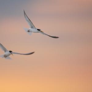 Impariamo il Birdwatching alla Torre in 4 lezioni
