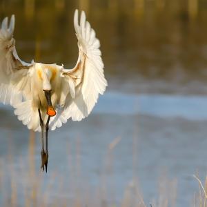 Fiera Internazionale del Birdwatching e del Turismo Naturalistico 2021
