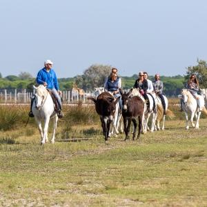 A cavallo nel cuore del Parco del Delta del Po