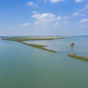I meravigliosi frequentatori del delta