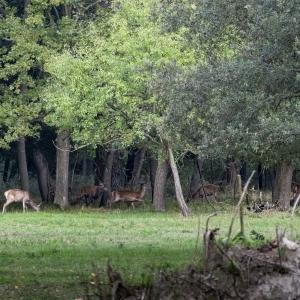Sulle tracce del cervo della Mesola