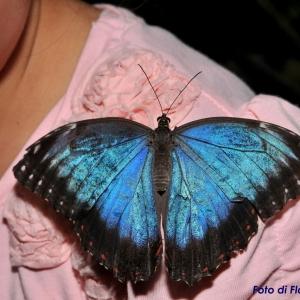 Farfalle in rosa Formiche in nero