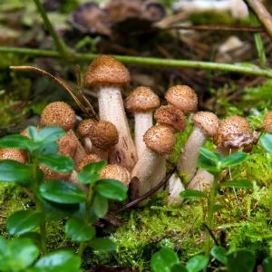 I funghi in pineta