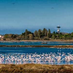 Lungo la via del sale da Chioggia a Ravenna